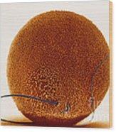 Fertilization Wood Print