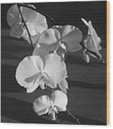 7 Flower Orchid Wood Print