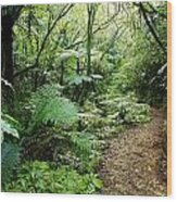 Forest Trail Wood Print