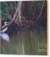 Great White Heron At Waters Edge Wood Print