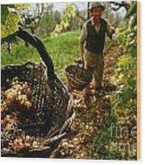 Harvesting In A Vineyard Wood Print