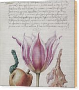 Illuminated Manuscript Wood Print
