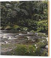 Jungle Stream Wood Print