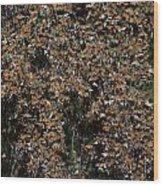 Monarch Butterflies Wood Print