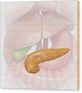 Pancreas Wood Print
