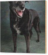 Portrait Of A Labrador Golden Mixed Dog Wood Print