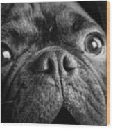 Portrait Of Pug Bulldog Mix Dog Wood Print