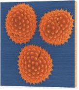 Ragweed Pollen (ambrosia Psilostachya) Wood Print