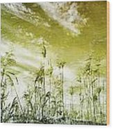Reed Grass Wood Print