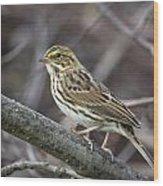 Savannah Sparrow Wood Print