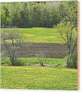 Spring Farm Landscape With Dandelion Bloom In Maine Wood Print