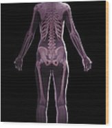 The Skeletal System Female Wood Print