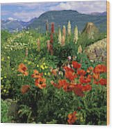 Usa, Colorado, Crested Butte Wood Print