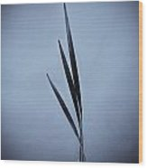 Water Reed Art Wood Print