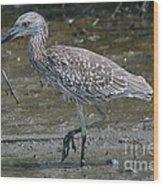 Yellow -crowned Night Heron Wood Print