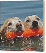 Yellow Labradors Wood Print