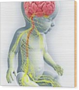 Baby's Nervous System Wood Print