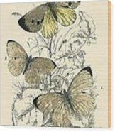 Butterflies Wood Print