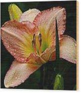 7839  Daylily Wood Print