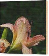 7840 Daylily Wood Print