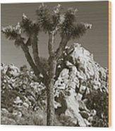 Joshua Tree National Park Landscape No 7 In Sepia Wood Print