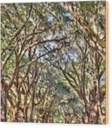 Plantation Allee Of Oaks Wood Print
