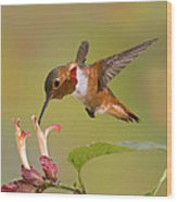 Allens Hummingbird Wood Print