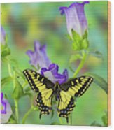 Anise Swallowtail Butterfly, Papilio Wood Print