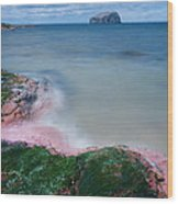 Bass Rock Wood Print