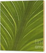 Calla Lily Stem Close Up Wood Print