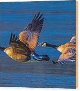 Canada Geese Wood Print