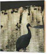 Common Cranes At Gallocanta Lagoon Wood Print
