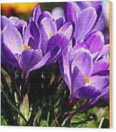 Crocus Wood Print