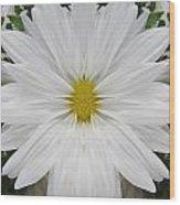 Daisy Dream Wood Print