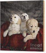 Festive Puppies Wood Print