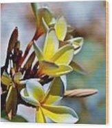 Frangipani Blossom Wood Print