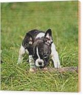 French Bulldoggs Wood Print