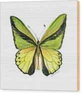 8 Goliath Birdwing Butterfly Wood Print