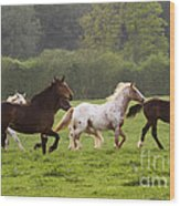 Horses On The Meadow Wood Print