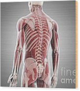 Human Muscles Wood Print