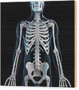 Human Skeleton, Artwork Wood Print