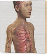 Internal Anatomy Pre-adolescent Wood Print