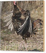 Jake Eastern Wild Turkey Wood Print by Linda Freshwaters Arndt