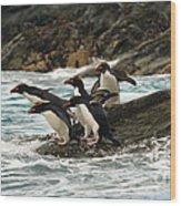 Macaroni Penguin Wood Print