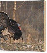 Male Eastern Wild Turkey Wood Print