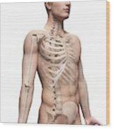 Male Skeletal System Wood Print