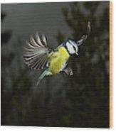 Mesange Bleue Parus Caeruleus Wood Print