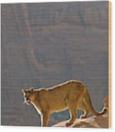 Mountain Lions In The Western Mountains Wood Print