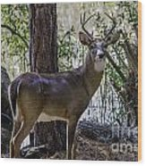 8 Point Buck In My Backyard Wood Print