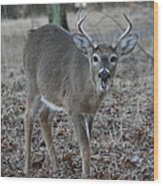 8 Point Buck Wood Print